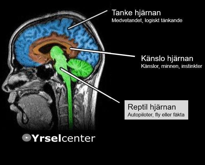 Tankehjärna Känslohjärnan Reptilhjärnan